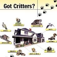 Critter Control of Delaware Valley, Spring House PA