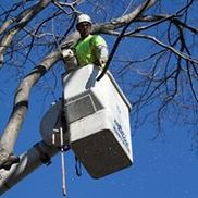 Rayzors Edge Tree Service, Stratford CT