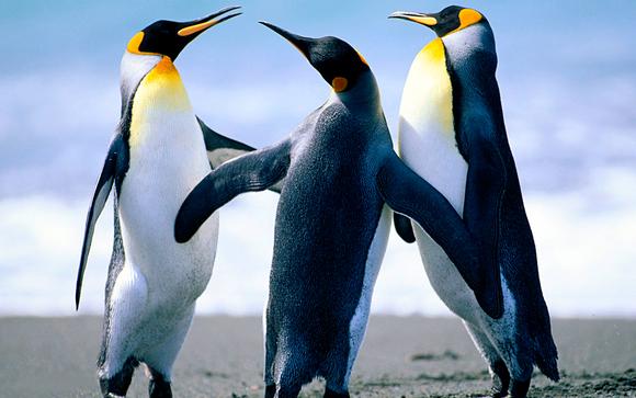 1496246668 penguins