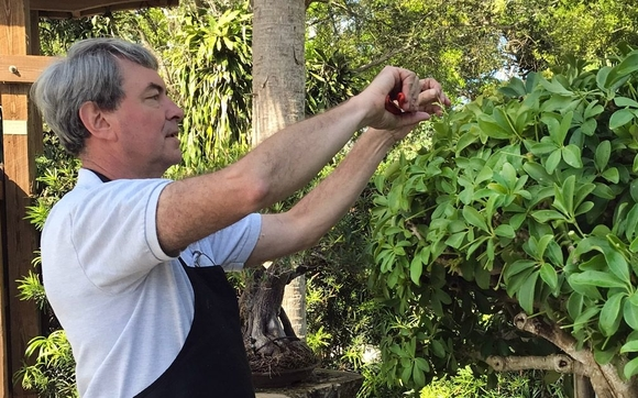 Meet Our New Bonsai Curator by Heathcote Botanical Gardens in Fort ...