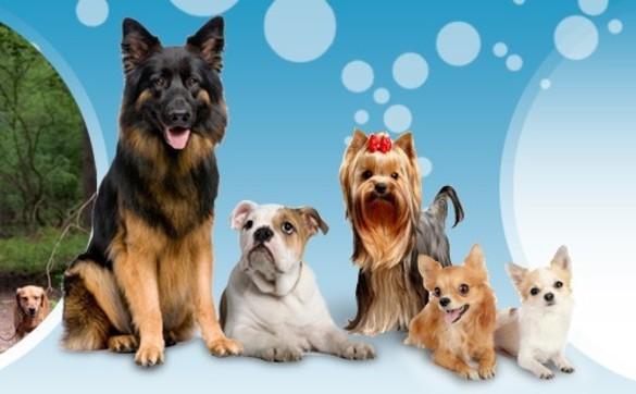 1450077048 dog girl walk
