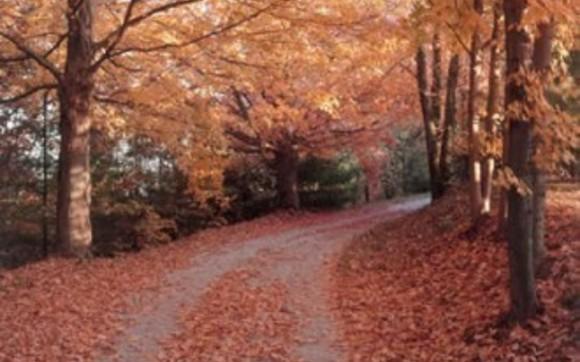 1396553203 autumn foliage road 330x248