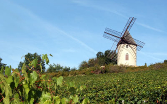 1396546737 burgundy vineyard