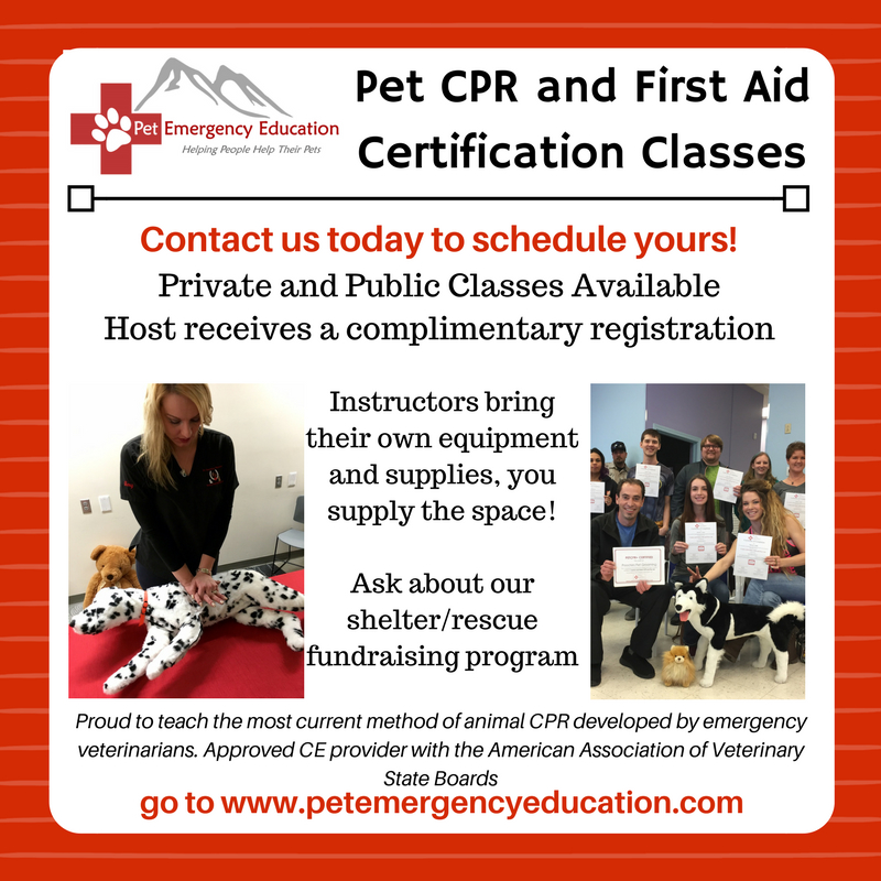Pet Cpr And First Aid Certification Class Groomer Training Center