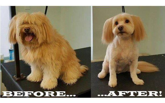 Kinetic Dog Grooming Victoria
