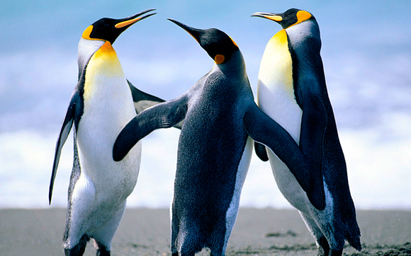 1496438920 penguins