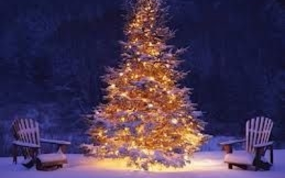 Outdoor trees lighted up in vail style by bloomingvails llc in we can wrap each branch of your tree with energy saving led lights in any color or multi colors most people prefer the warm white lights not the blue white aloadofball Image collections