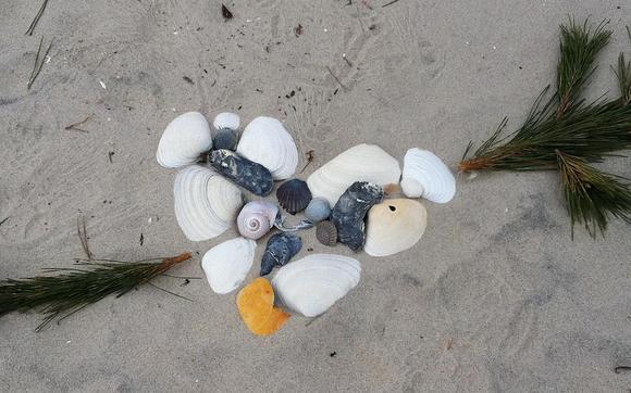 1445662928 shell heart wedding