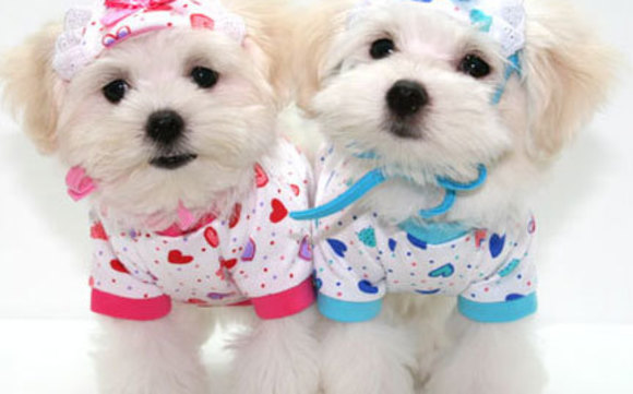 1450077270 dog clothes