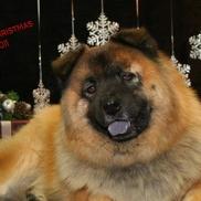 Carla Eaddy from Dogs Rule!