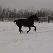 1461607980 horses 002