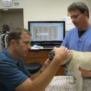 Marcus Smith, DVM from Chattahoochee Animal Clinic